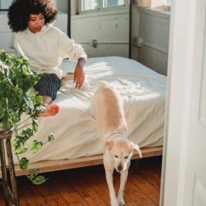 Mythen der Hundeerziehung